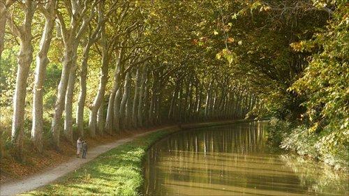 canal du midi plane trees