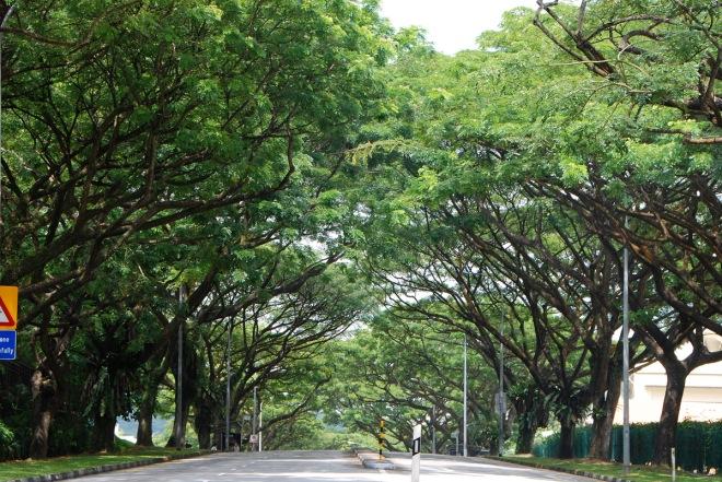01-rain-tree-06