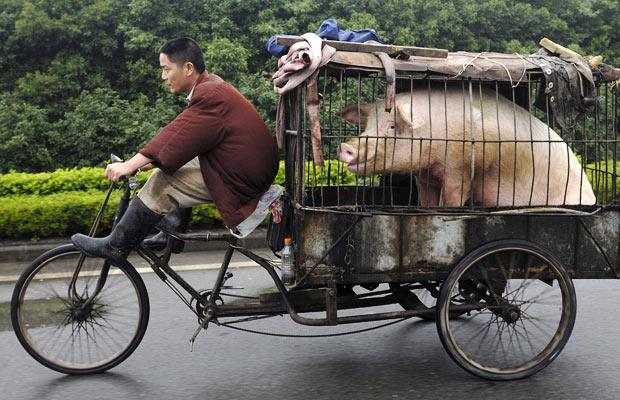 pig mating with woman | just b.CAUSE