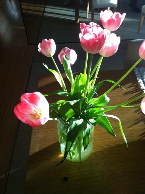 04 tulips