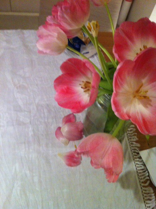 10 tulips-saturday evening