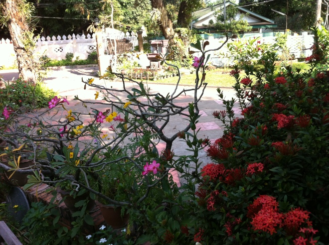 flowers and trees 034