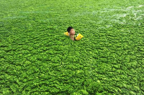chinese boy with algae