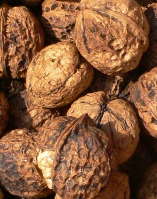 walnuts in shell-1