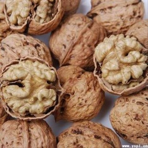 walnuts partially unshelled-1
