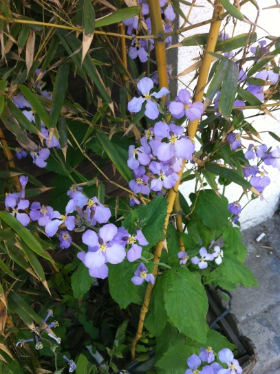 flowers along canal 001