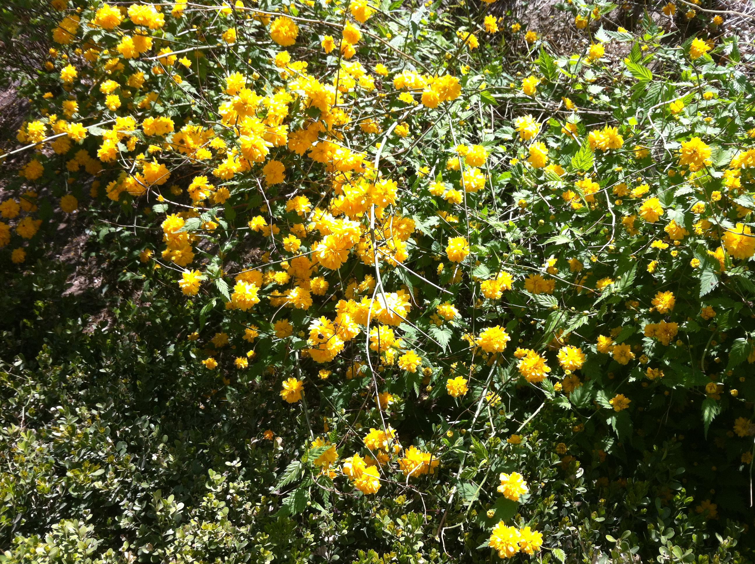 Flowering Weeds The Heart Thrills