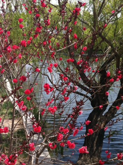 flowers along canal 006