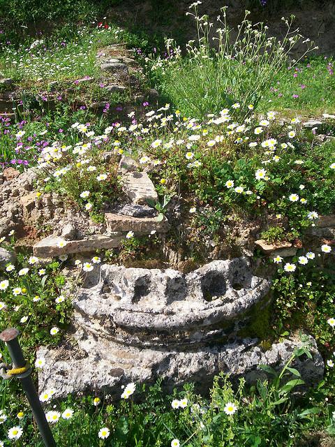 olympia-wildflowers-5