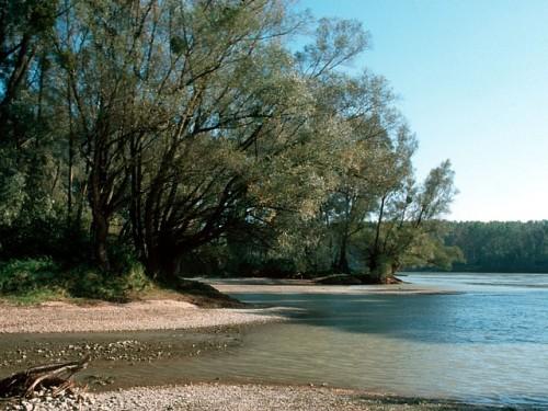 poplars on the Danube-1