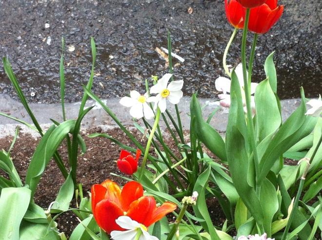 white flowers 014