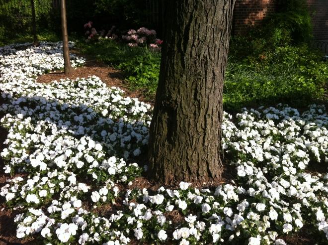 white flowers 021