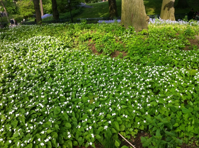 white flowers 028