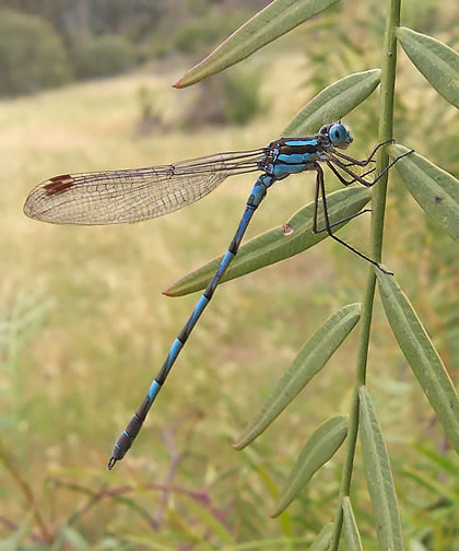 beautiful dragonfly-2