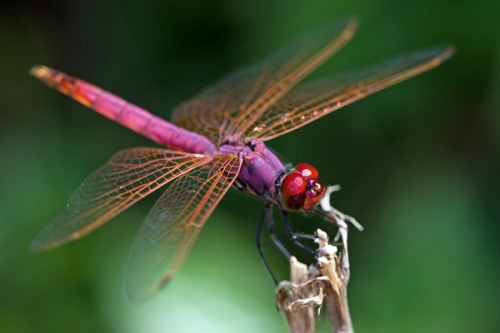 beautiful dragonfly-3