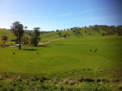 upper murray river valley-corryong 050