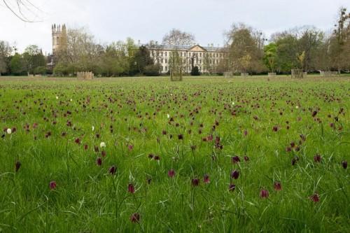 magdalen meadow