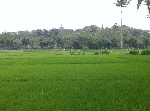 Borobodur across rice paddies 002