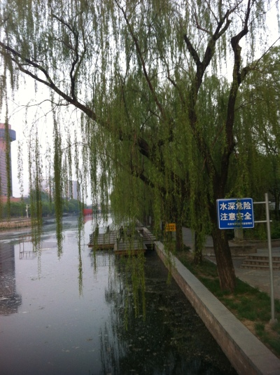 peking willows 004