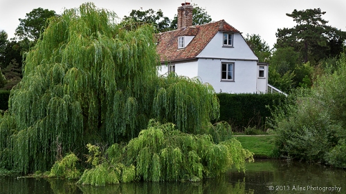 weeping-willow-Grantchester