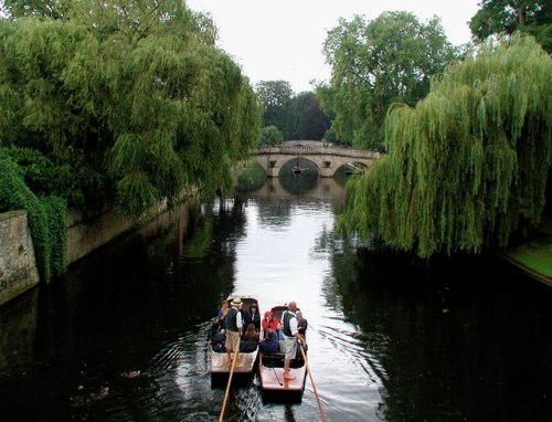 weeping willows on the River Cam
