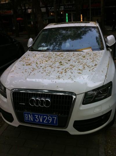 golden rain on car
