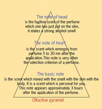 olfactive_pyramid