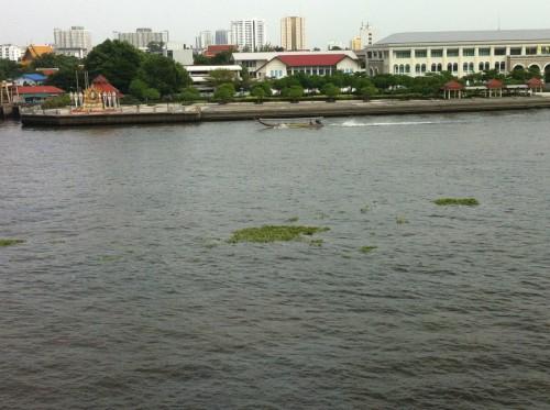 water hyacinths 001