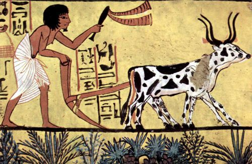 egyptian ploughing