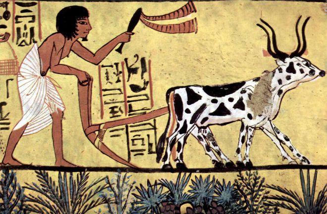 egyptian ploughing
