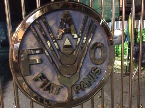 FAO icon