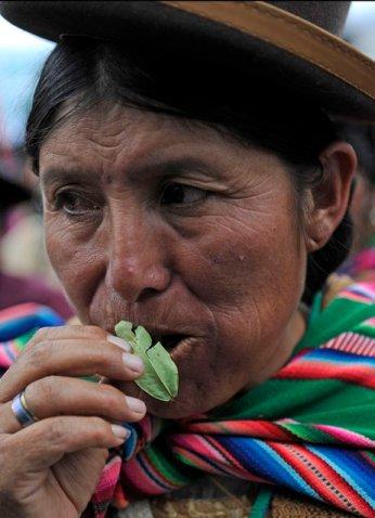 coca leaf chewing