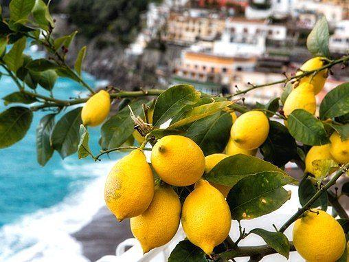 lemons Liguria